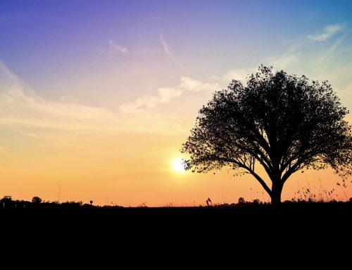 Levensboom sieraad