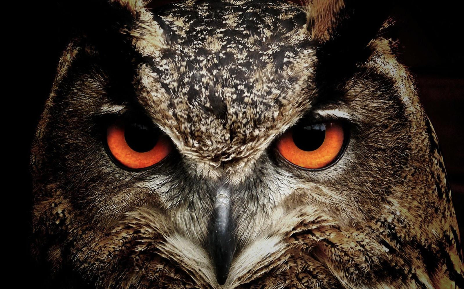 Spirituele betekenis dieren op je pad