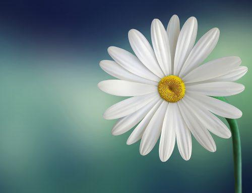 Symbolische betekenis bloemen en planten